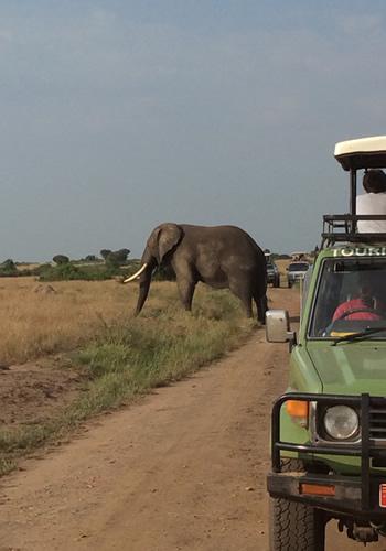 selfdrive uganda